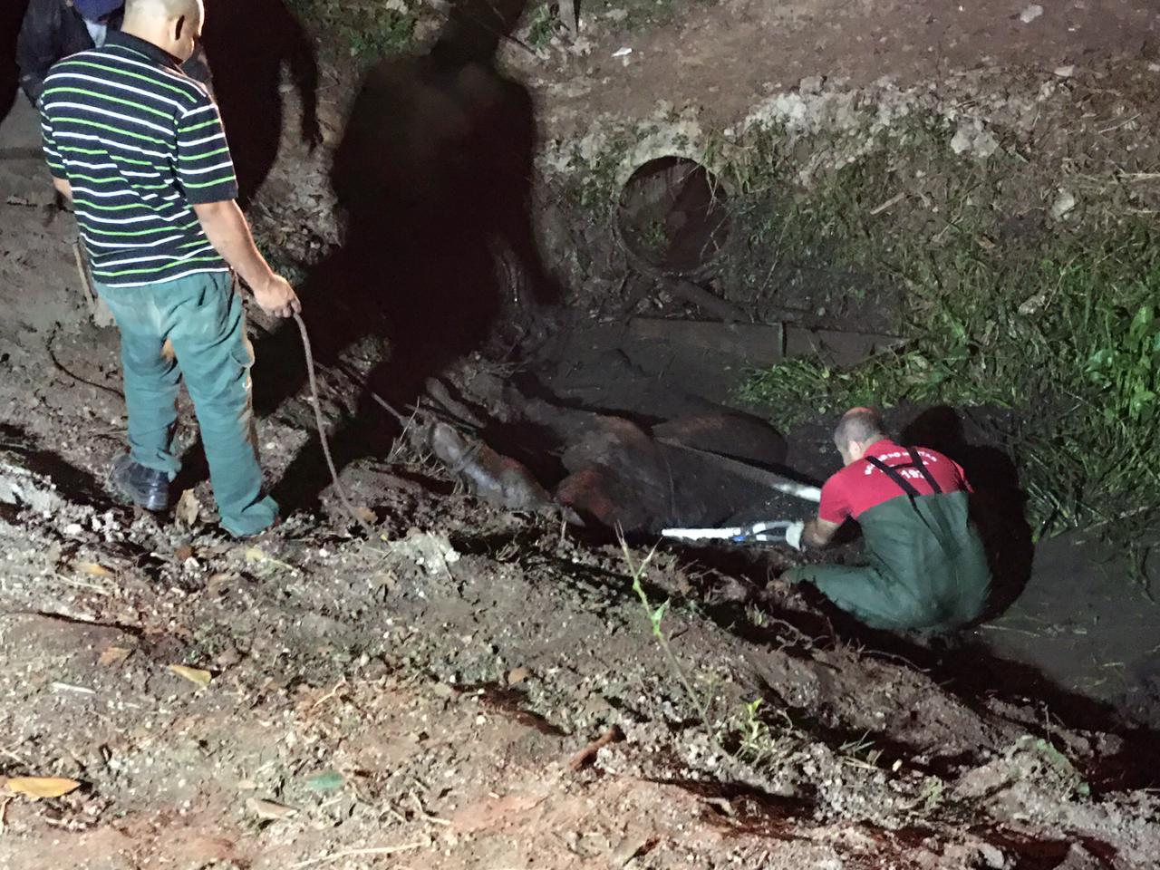 Os socorristas usaram duas cintas de reboque e resgataram o cavalo que foi entregue ao seu dono - Divulgação/CBM Gaspar/ND
