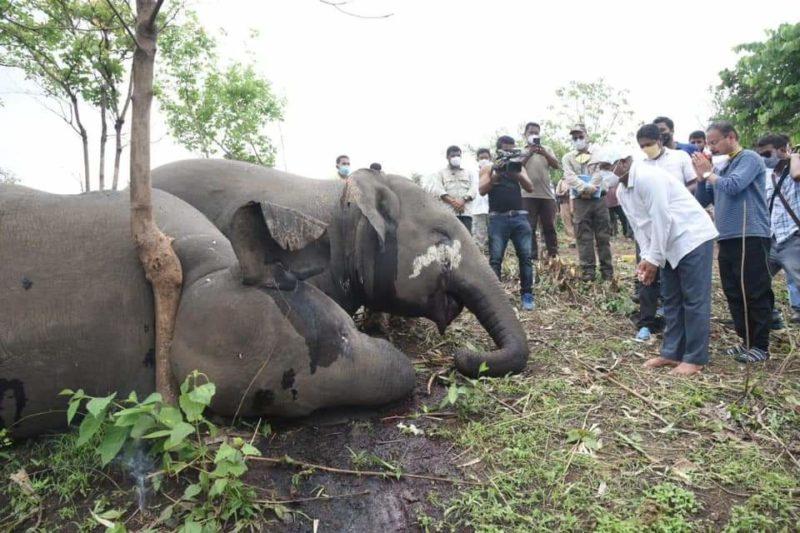 Autoridades locais abriram investigação para descobrir causa dos óbitos dos elefantes; Descarga elétrica teria acontecido na quarta-feira (12). Assunto gerou comoção na Índia – Foto: Reprodução/Twitter