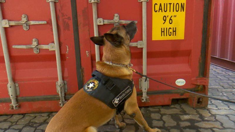 Cães farejadores facilitam o trabalho – Foto: Alfa Stofelli/NDTV