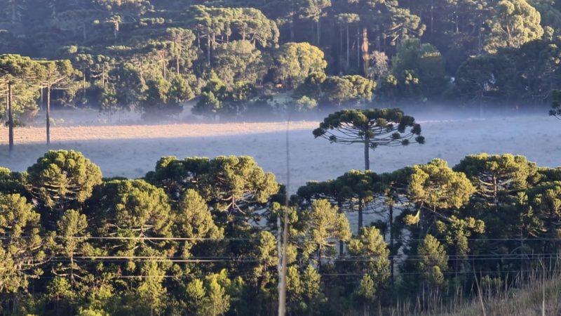 Geada pode aparecer no Planalto Norte nesta semana – Foto: Mycchel / Legnaghi São Joaquim Online