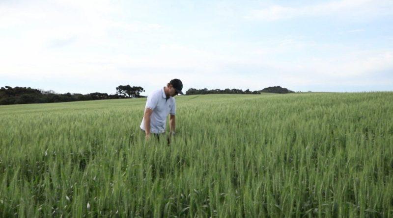 ND Agro deste domingo vai conhecer cultivo está gerando lucros para produtor rural de SC – Foto: Divulgação/ND