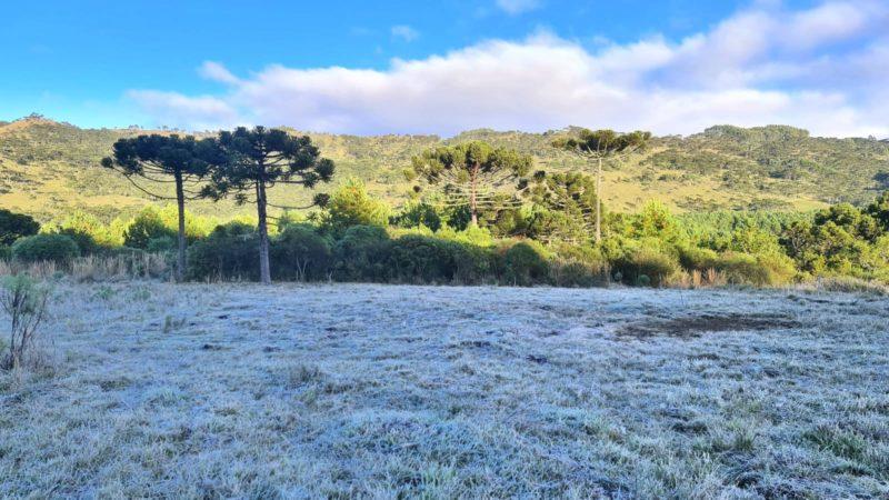 Serra catarinense amanhece gelada neste sábado – Foto: Mycchel Legnagh/Reprodução/ND