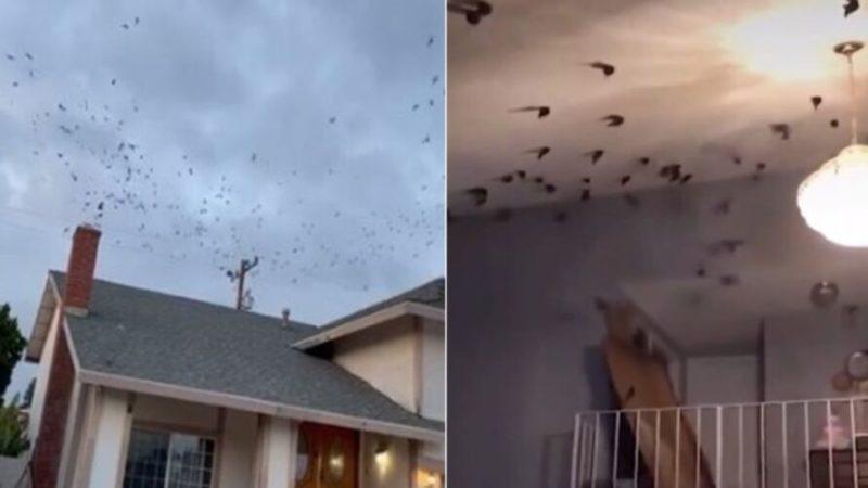 Aves invadiram o imóvel – Foto: Reprodução