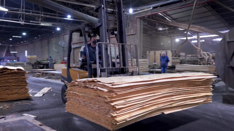 Indústria madeireira também é forte no Planalto Norte – Foto: Reprodução/NDTV