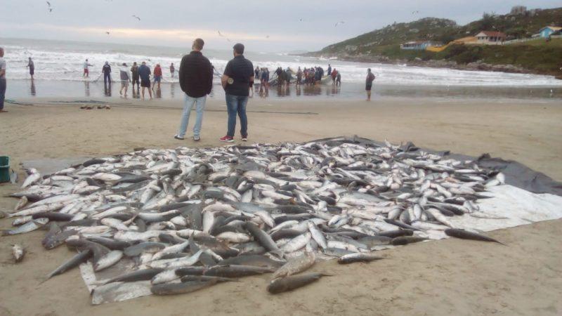 Pesca da tainha na manhã deste sábado (22), em Imbituba – Foto: Reprodução/ND