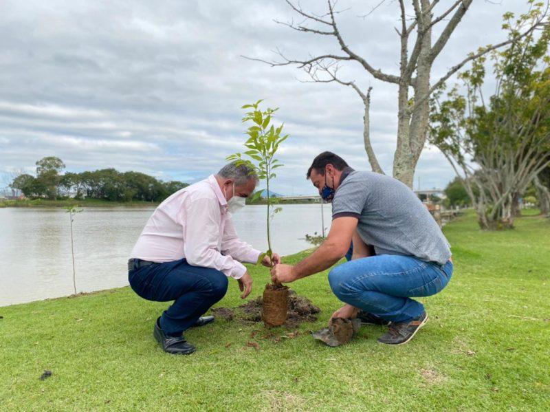 Campanha de incentivo ao plantio de árvores nativas em áreas verdes do município – Foto: PMT/Divulação/ND