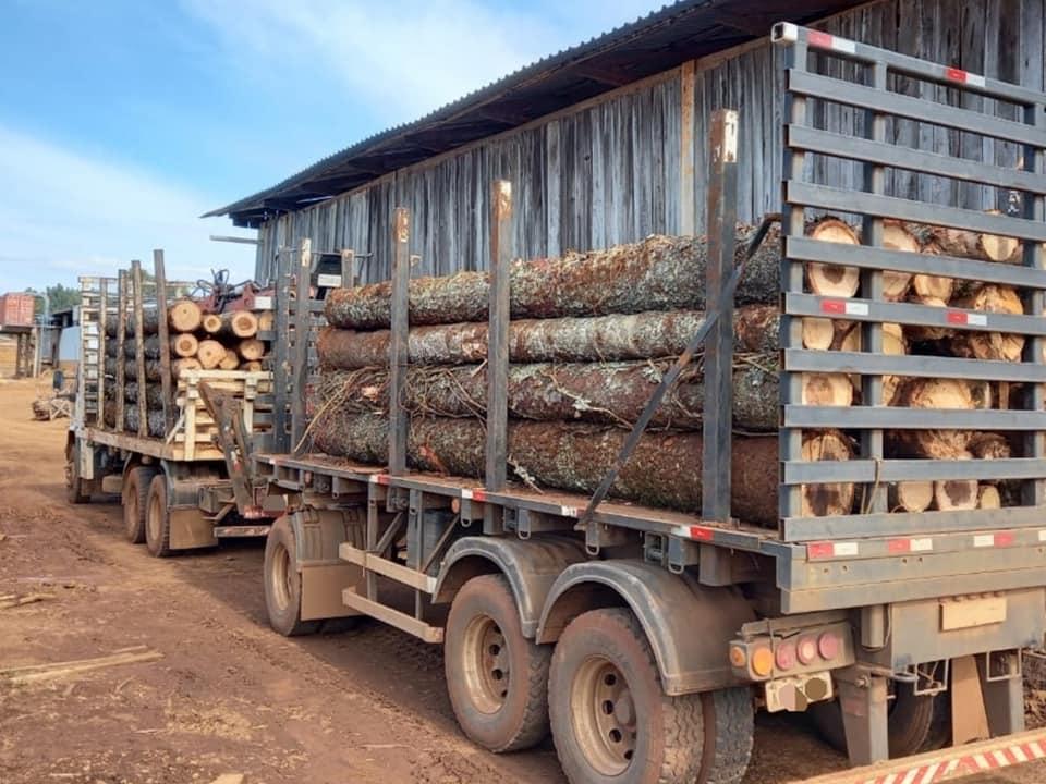 Segundo apurado pela polícia, o produto florestal é proveniente de Palma Sola e seria comercializado na região. - Polícia Militar Ambiental/Divulgação/ND