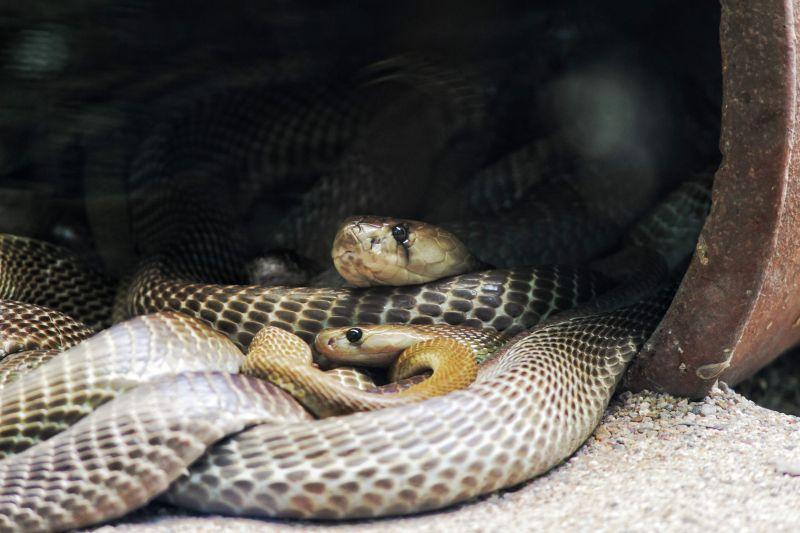 Animais mais perigosos do mundo - Crédito: pavan adepu no Unsplash/Busca voluntária/ND