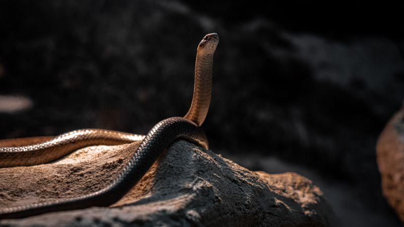 Animais mais perigosos do mundo - Crédito: Felipe Simo no Unsplash/Busca voluntária/ND