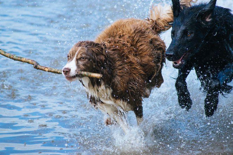 Animais mais perigosos do mundo - Crédito: Pixabay /Busca voluntária/ND