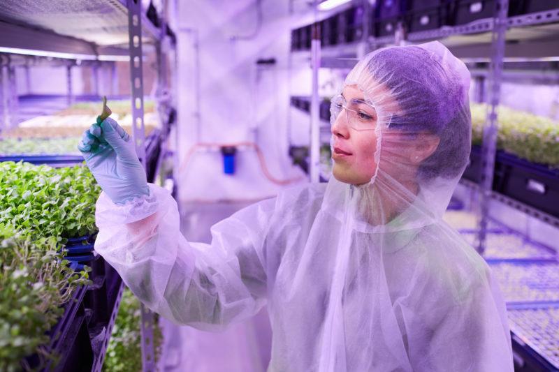 A Agricultura 4.0 adota recursos tecnológicos em busca de maior produtividade, eficácia em monitoramento e com intuito de menores impactos ambientais – Foto: Divulgação
