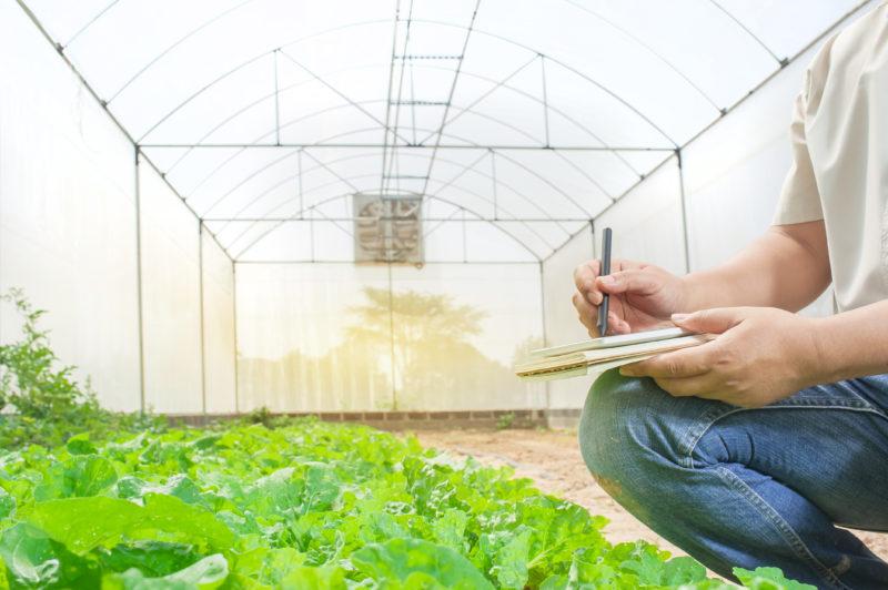 Nos próximos anos o setor terá mudanças em suas produções, visando criar políticas agrárias e ambientais que atendam à conservação da biodiversidade – Foto: Divulgação