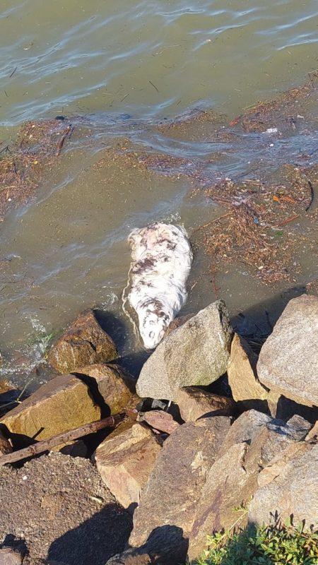 Prefeitura pretende remover o animal do local até quinta-feira