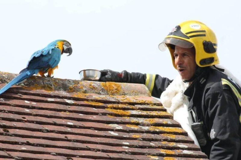 Arara 'boca suja' solta palavrão após ser resgatada por bombeiro – Foto: Foto: Reprodução/The Telegraph/Twitter/ND