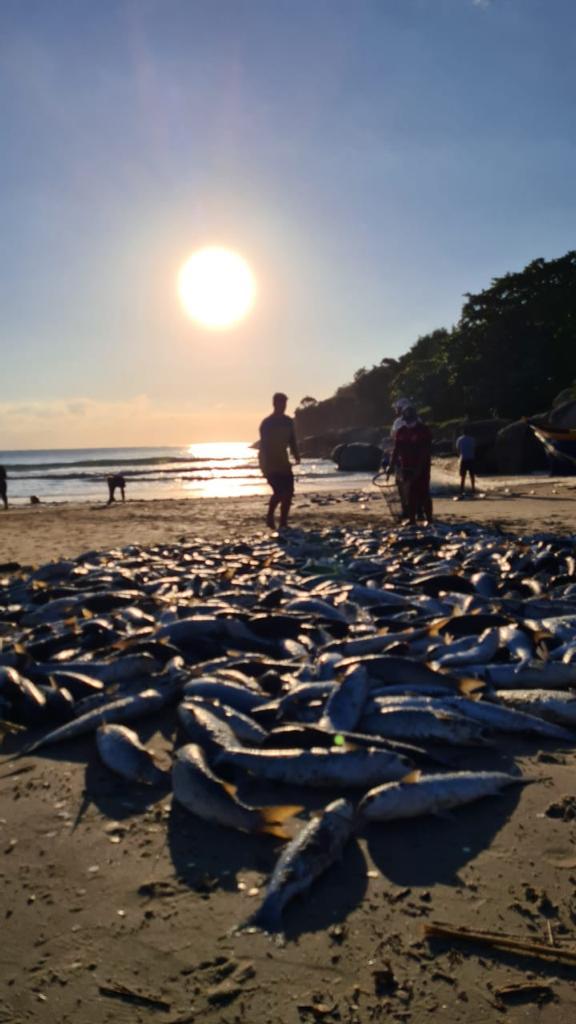 Praia da Barra da Lagoa, neste sábado (12) - Divulgação/ND