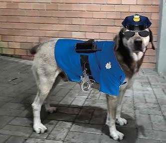 Piá chegou a ganhar uma roupinha de policial – Foto: PMRv/Divulgação