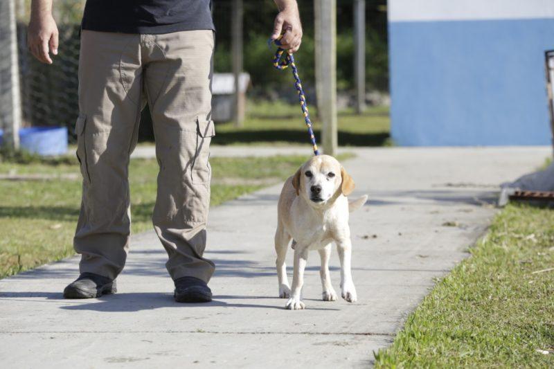 Astro é um dos animais que aguardam um novo lar – Foto: Prefeitura de Joinville/Divulgação