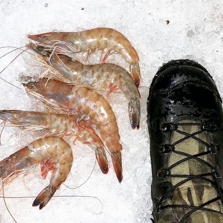 Mais de 2 toneladas de pescados foram apreendidas no porto de Itajaí - PMSC Ambiental/Divulgação