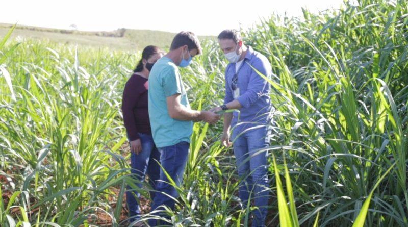 ND Agro deste domingo (6) mostra detalhes do cultivo do Capim Capiaçu em propriedade do Oeste de SC – Foto: Divulgação/ND