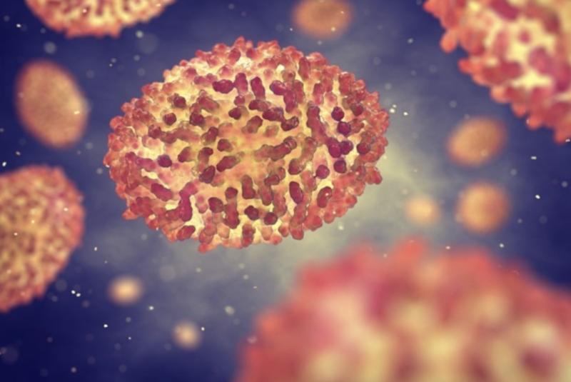 Casos de varíola dos macacos fora da África deixam a Europa em alerta – Foto: Reprodução