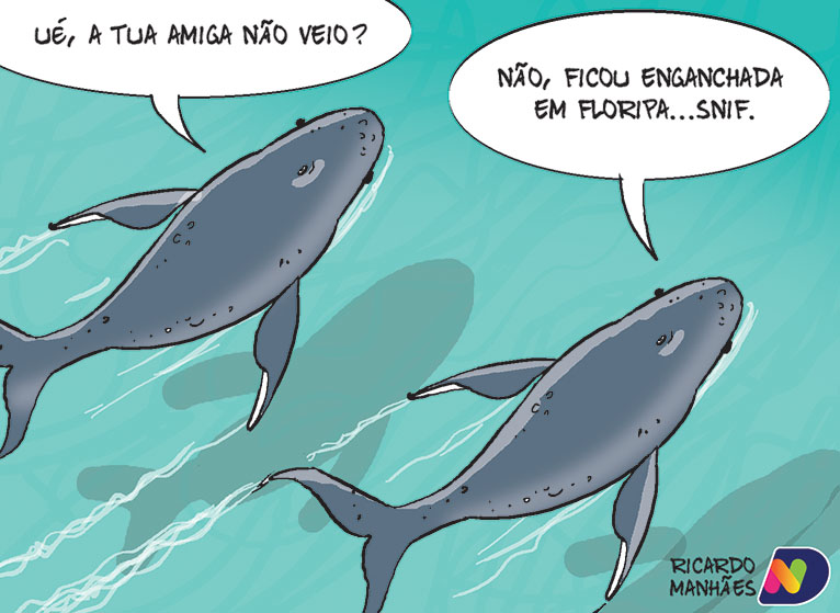 O drama das baleias em Santa Catarina