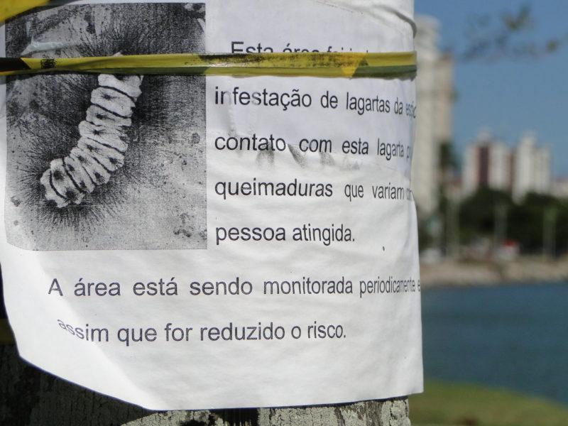 Lagarta de fogo interdita área nobre da Beira-Mar Norte; área está sendo monitorada diariamente, de acordo com a prefeitura de Florianópolis – Foto: Diogo de Souza/ND