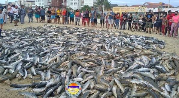 Fartura de tainha surpreendeu pescadores do Norte da Ilha, neste domingo (6) - Instagram/Reprodução/ND