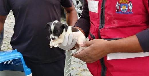 Filhote foi resgatado nesta quinta-feira (10) – Foto: PMF/Divulgação/ND
