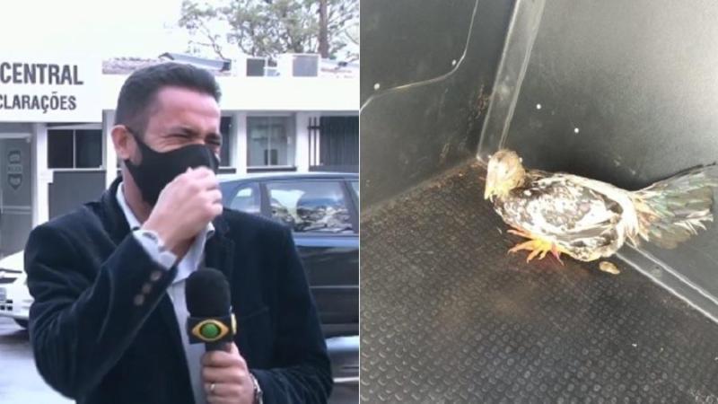 Repórter teve uma crise de riso ao noticiar prisão de galo