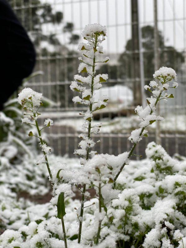 AO VIVO: Acompanhe a chegada da neve por câmeras em SC