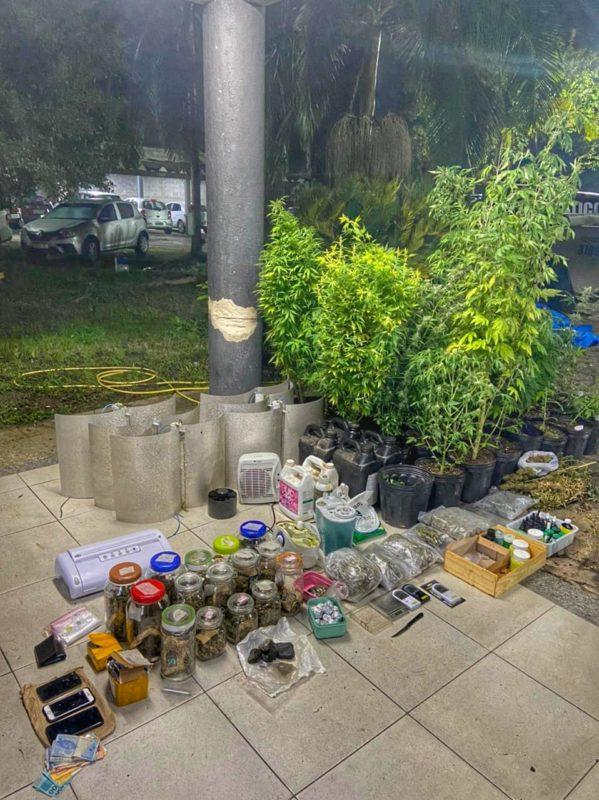 Polícia faz apreensões em sítio que cultivava maconha para venda – Foto: BPM/Divulgação/ND