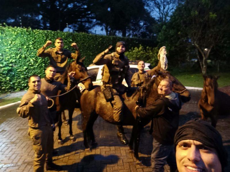 Policiais militares resgataram três cavalos em córrego de Florianópolis – Foto: Divulgação/PMSC