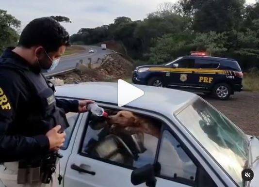 Dois cachorros foram encontrados presos dentro de carro por policiais rodoviários no trecho sentido a Faxinal dos Guedes, no Oeste catarinense – Foto: PRF/Divulgação/ND