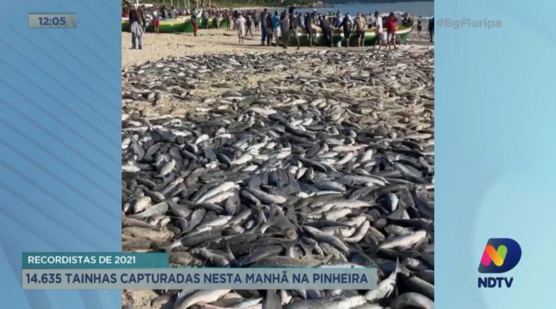 Pesca da tainha na praia da Pinheira nesta quinta-feira – Foto: Reprodução/NDTV