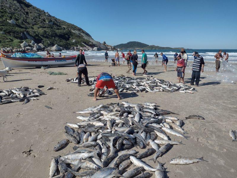 Praia do Moçambique foi um dos destaques da safra em Florianópolis – Foto: Divulgação/ND