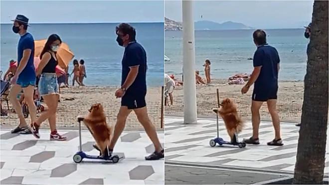 Cão se equilibra em patinete elétrico em praia da Espanha – Foto: Reprodução Tiktok/ @user6874800004072
