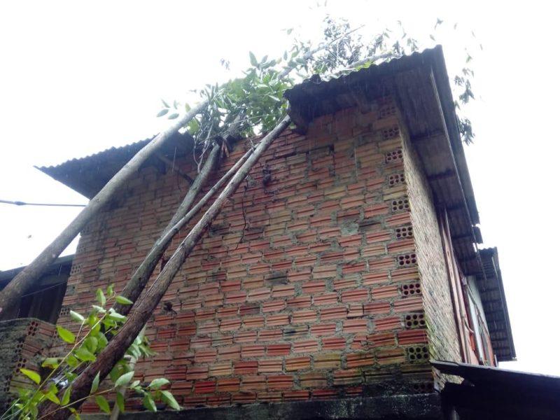 Árvore caiu em cima de uma casa em Criciúma e teve que ser cortada pelo Corpo de Bombeiros – Foto: Corpo de Bombeiros/ND