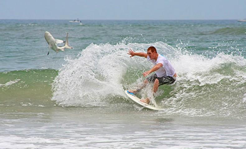 Americano flagrou um tubarão ao fotografar turista – Foto: Kem McNair/ Divulgação/ND
