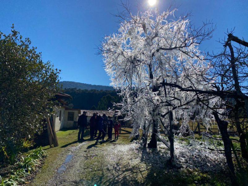 Árvore virou ponto turístico em Urubici – Foto: Maria Fernanda Salinet/ND