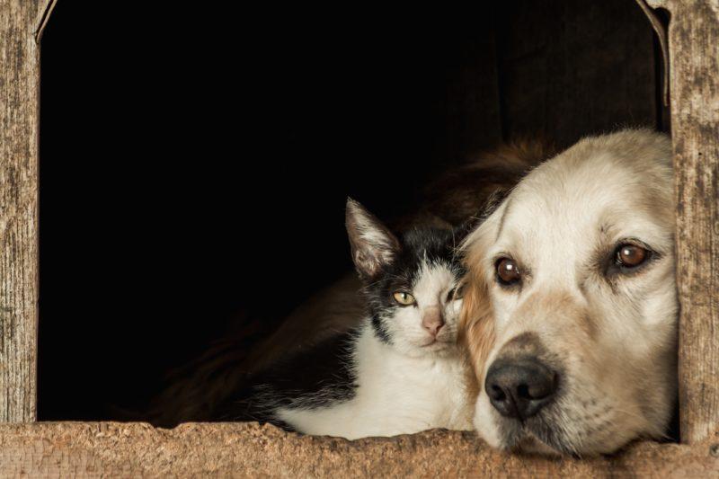 """""""Não deixe seu melhor amigo com raiva"""", é o slogan da campanha – Foto: Freepik/Reprodução/ND"""