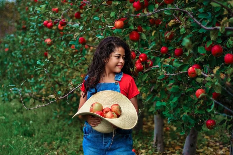 Maçãs são uma das principais produções do Estado na agricultura – Foto: Thuisa Stache/Reprodução/ND