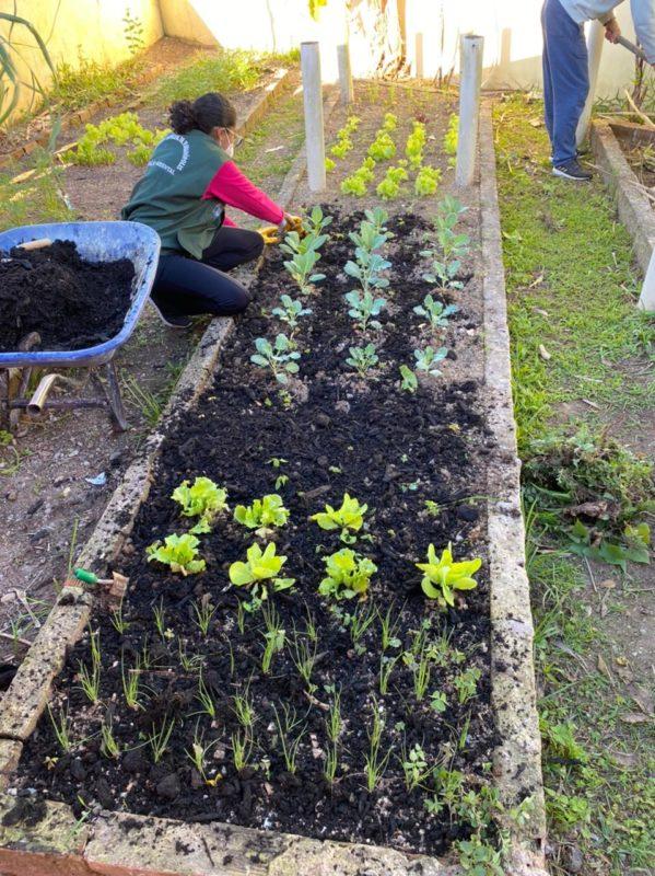 Hoje, são 187 hortas no Programa Municipal de Agricultura Urbana de Florianópolis – Cultiva Floripa. – Foto: PMF/Divulgação/ND