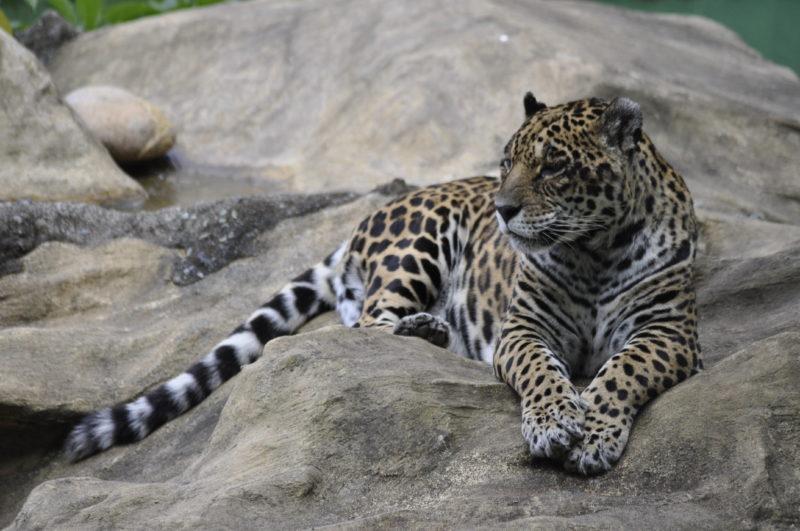 A educação ambiental e a promoção de atividades socioculturais são partes essenciais do Zoo – Foto: Arquivo/Zoo Pomerode