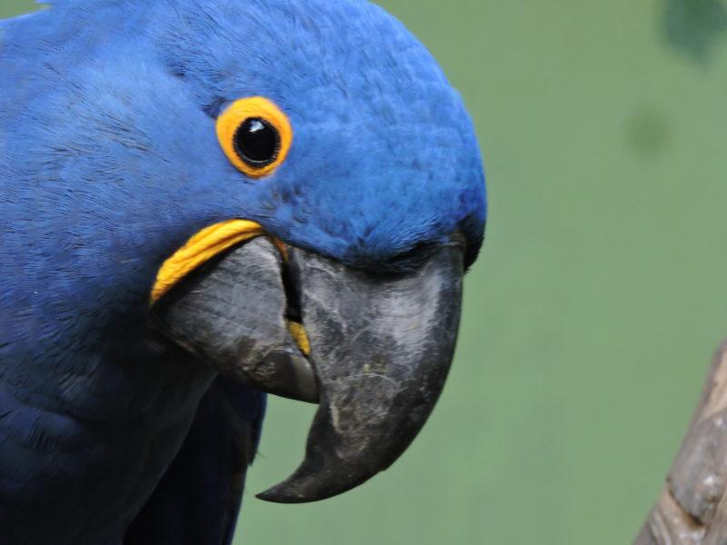 """O Zoo Pomerode mantém seus esforços <span style=""""font-weight: 400;"""">voltados para ações de proteção da biodiversidade</span> &#8211; Foto: Arquivo/Zoo Pomerode"""