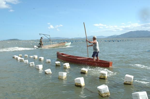 Pescadores trabalhando em área de cultivo de ostras e mexilhões – Foto: Nílson Teixeira/Epagri/Divulgação/ND