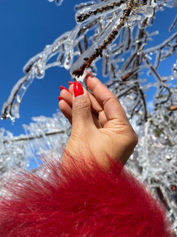 Em São Joaquim, árvores amanheceram congeladas nesta terça-feira – Foto: Maria Fernanda Salinet/ND