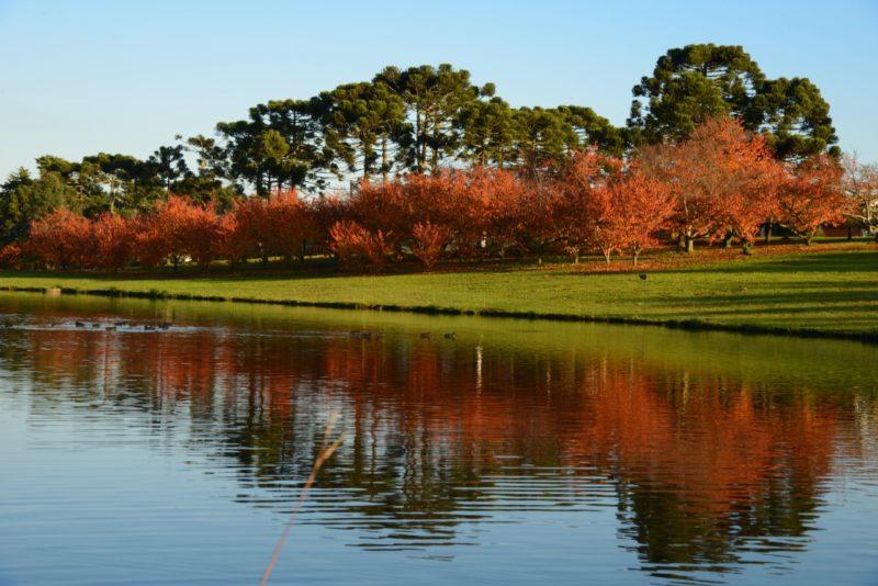Campos com cerejeiras são algumas das belas paisagens de São Joaquim – Foto: Foto Argus/Reprodução/ND