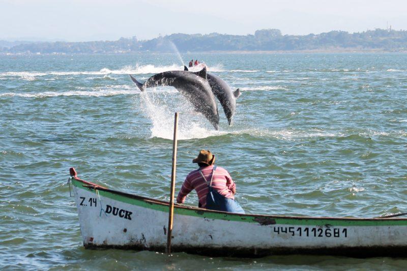 Pesca com auxílio dos botos é tradicional em Laguna – Foto: Elvis Palma/Prefeitura Laguna/ ND