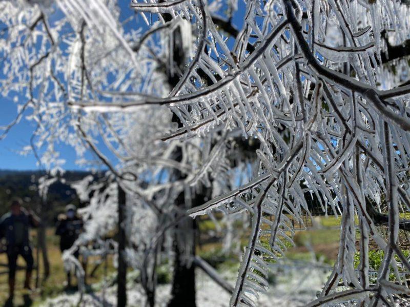 Árvore com gelo em Urubici, município que está na lista do levantamento da Santur – Foto: Maria Fernanda Salinet/Divulgação/ND