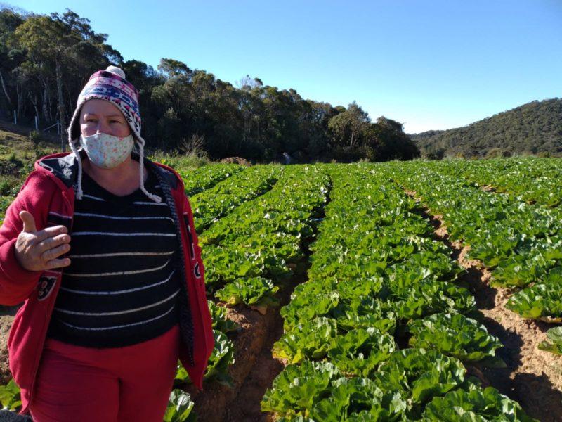 Maristela H. de Jesus também utiliza os aminoácidos para proteger suas plantações. Na foto, está ao lado das suas acelgas – Foto: Nícolas Horácio/ND